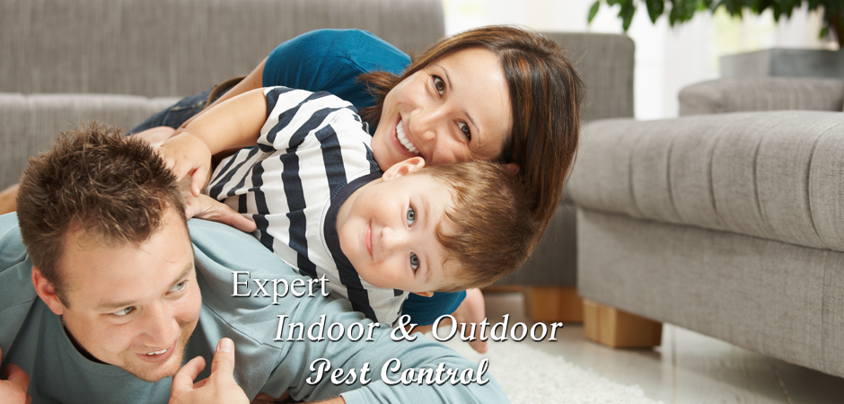Expert-Indoor-and-Outdoor-Pest-Control
