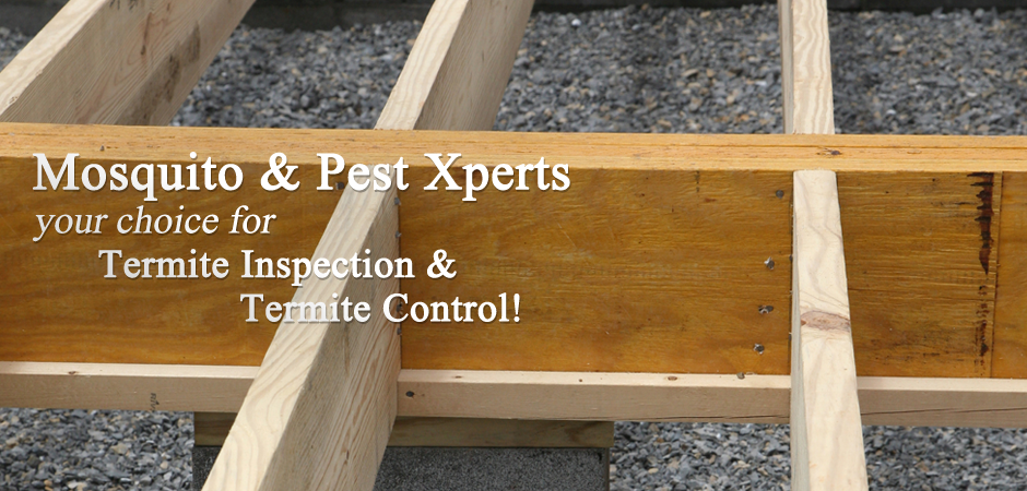 Mosquito-and-Pest-Xperts-your-choice-for-Termite-Inspection-and-Termite-Control2
